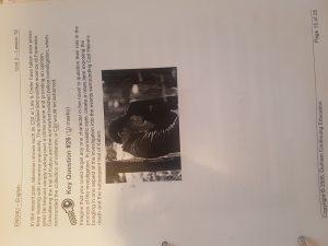 Snow Falling On Cedar Paper Example Onlineessaypaper Com Argumentative Essay Cedars